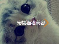 宠物猫猫美容